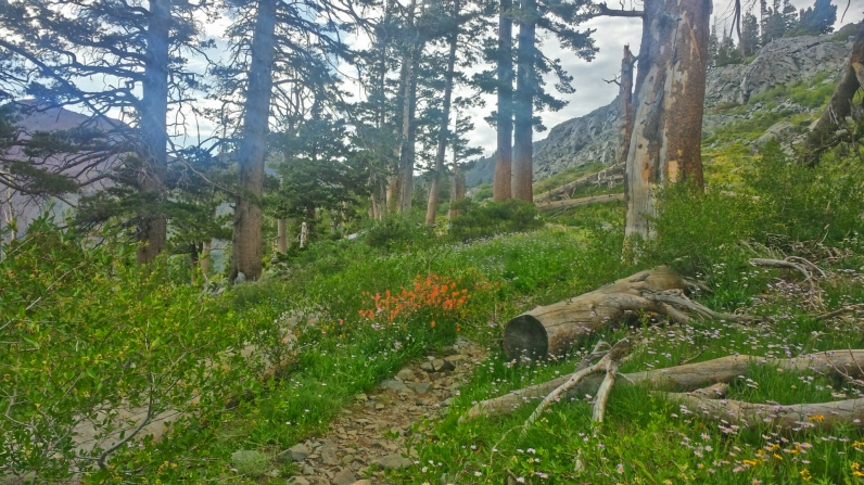 The Pacific Crest Trail in all of it's non descript glory. There are so many random places like this on the trail that never get any love. It's alway the trail celebrities like the Sierra and Crater Lake, etc.