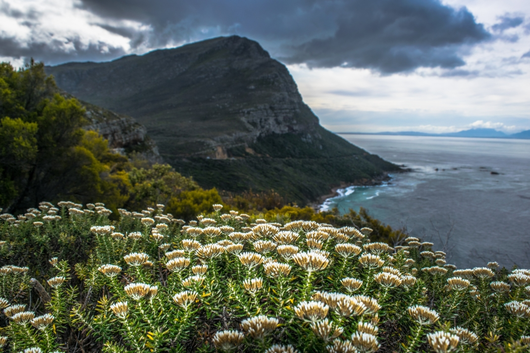 Fynbos, endemic to the Cape is incredible beautiful, but also incredibly flammable. Earlier in the season, massive fires broke out and destroyed homes and property for many people.