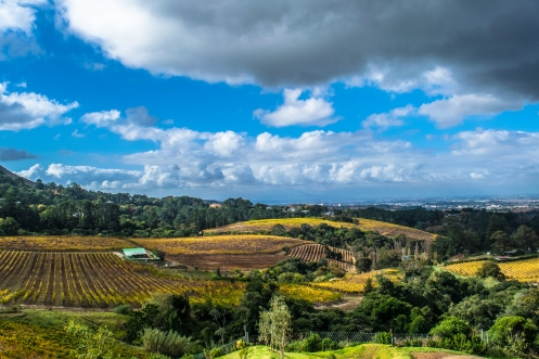 Constantia, South Africa is wine country. Stop by one of the many vineyards for a tasting and young delicious but expensive snacks.