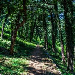 7. In the higher switchbacks of the path, the trail enters tall forest, and gains some shade.