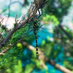 5. Dragonfly on the trail!
